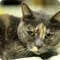 Adopt A Pet :: Isis - Sacramento, CA