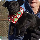 Adopt A Pet :: Donner Adoption Pending Congrats Picone Family!