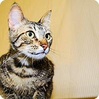 Adopt A Pet :: Tinkerbell - Larned, KS