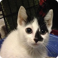 Adopt A Pet :: Jelly - East Brunswick, NJ