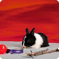 Adopt A Pet :: Bellamy - Marietta, GA