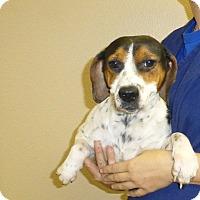 Adopt A Pet :: Carly - Oviedo, FL