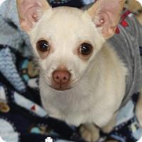 Adopt A Pet :: Ben - Washington, DC
