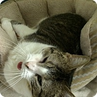 Adopt A Pet :: Detroit Mama - Byron Center, MI