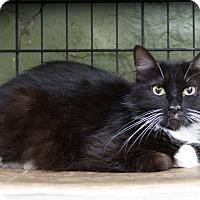 Adopt A Pet :: Minnie - Marlinton, WV
