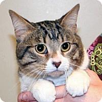 Adopt A Pet :: Stellar - Wildomar, CA