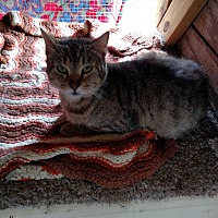 Adopt A Pet :: Tiger - Benton, PA