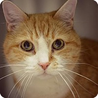 Adopt A Pet :: Pinky - Niagara Falls, NY
