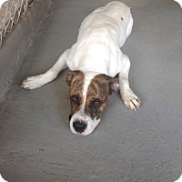 Adopt A Pet :: Patches - Livingston Parish, LA