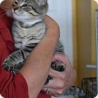 Adopt A Pet :: Auburn - Surrey, BC