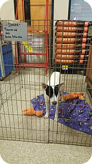 Border Collie Mix Dog for adoption in Brownsville, Texas - Shiner