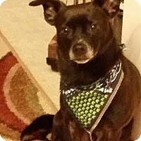 Adopt A Pet :: Bear (aka Baby) - McKenna, WA