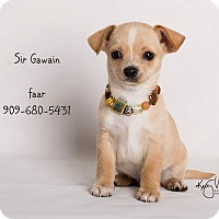 Adopt A Pet :: Sir Gawain - Riverside, CA