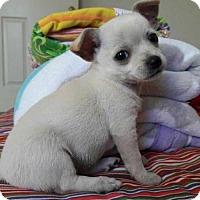 Adopt A Pet :: Jasmine - Chino, CA