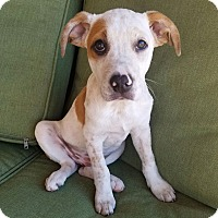 Adopt A Pet :: Bailey - Knoxville, TN