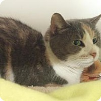 Adopt A Pet :: Candy Cane - Reisterstown, MD