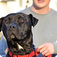 Adopt A Pet :: Luna - Washington, GA