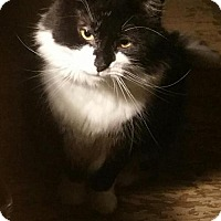 Adopt A Pet :: Elek - Grand Ledge, MI