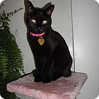 Adopt A Pet :: Katty - New York, NY