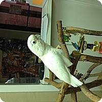 Adopt A Pet :: Gigi - Punta Gorda, FL