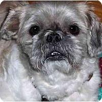 Adopt A Pet :: Po-NJ - Mays Landing, NJ