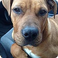 Adopt A Pet :: Amos - Marietta, GA