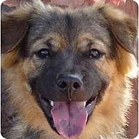 Adopt A Pet :: Chance - Las Vegas, NV