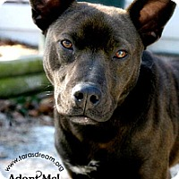 Adopt A Pet :: Kassidy - Independence, MO
