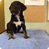 Adopt A Pet :: Monopoly - River Falls, WI