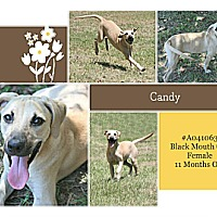 Adopt A Pet :: Candy - Lufkin, TX