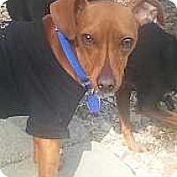Adopt A Pet :: Jake - Columbus, OH