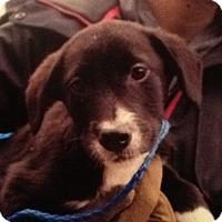 Adopt A Pet :: Keifer - Stafford Springs, CT