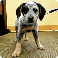 Adopt A Pet :: Regan - Cleveland, OH