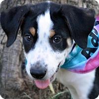Adopt A Pet :: Oscar - Burleson, TX