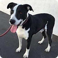 Adopt A Pet :: Donny - Canoga Park, CA