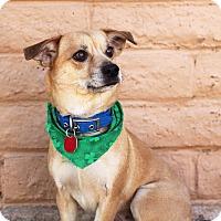 Adopt A Pet :: JEAN - Phoenix, AZ