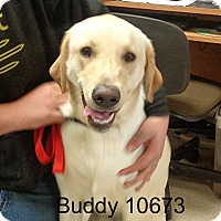Adopt A Pet :: Buddy - baltimore, MD