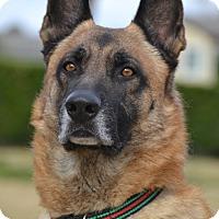 Adopt A Pet :: Donner - Altadena, CA