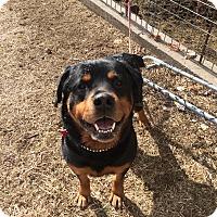 Adopt A Pet :: Jordan - Frederick, PA