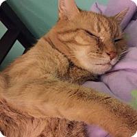 Adopt A Pet :: Babyface - Staten Island, NY
