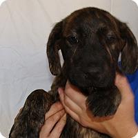 Adopt A Pet :: Cash - Oviedo, FL