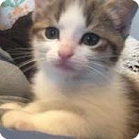 Adopt A Pet :: Daisy - Medford, NJ