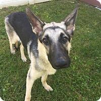 Adopt A Pet :: Angus - Whitestone, NY