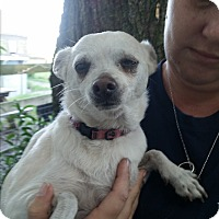Adopt A Pet :: Sandy-PAD ELIGIBLE - Chiefland, FL