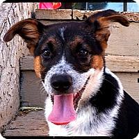 Adopt A Pet :: Decker - Johnson City, TX