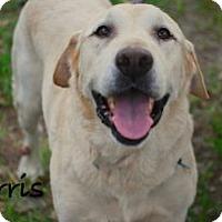 Adopt A Pet :: Harris - Minneola, FL