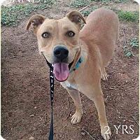 Adopt A Pet :: Sandy - DeForest, WI
