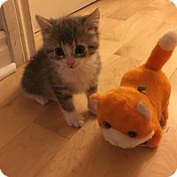 Adopt A Pet :: Porgie - Toronto, ON