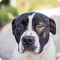 Adopt A Pet :: Bob - Berkeley, CA