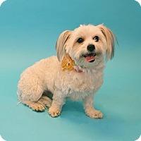 Adopt A Pet :: Lilly - Visalia, CA